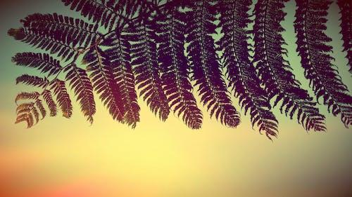 Foto profissional grátis de amarelo, ecológico, Nova Zelândia, pôr do sol