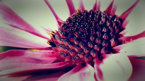 Foto profissional grátis de branco, flor, lilás, macro
