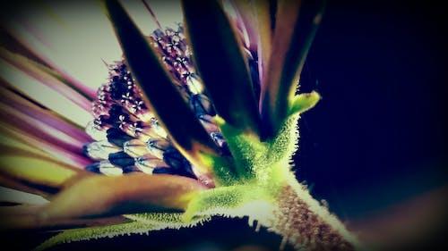 Foto profissional grátis de ecológico, flor, lilás, macro