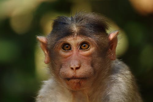 Monkey In Close Up Photography
