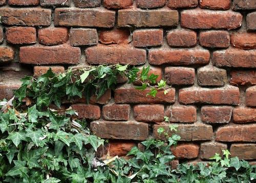 Imagine de stoc gratuită din zid de cărămidă