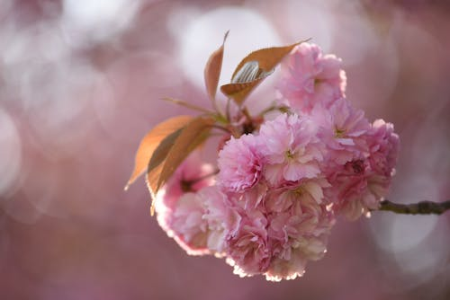 Pink Flowers In Macro Photography