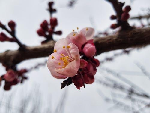 Free stock photo of abstract photo, art photo, beautiful flower, beautiful flowers