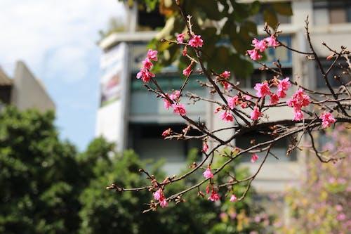 Безкоштовне стокове фото на тему «вишневий цвіт, Макрофотографія, місячний, Новий рік»