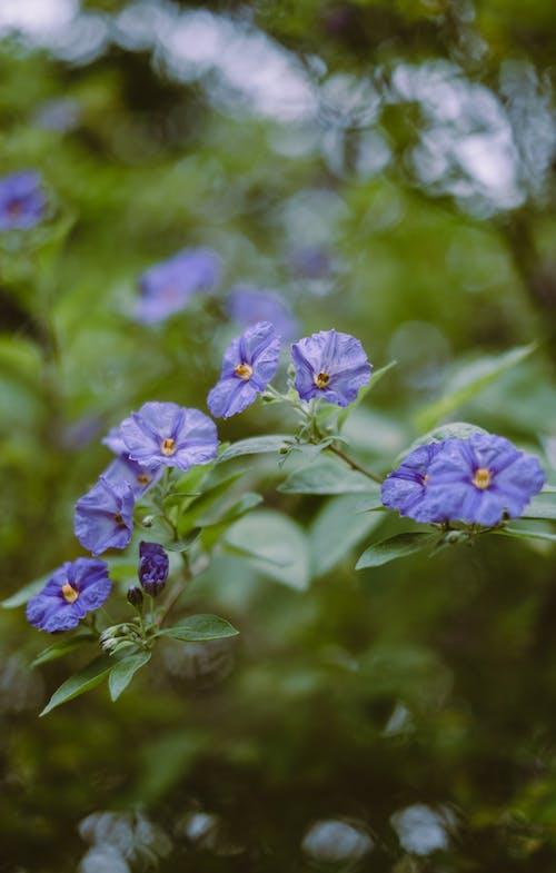 Immagine gratuita di ambiente, bellissimo, bocciolo, botanico