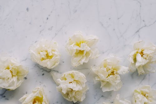 White and Yellow Flowers on Marble Surface