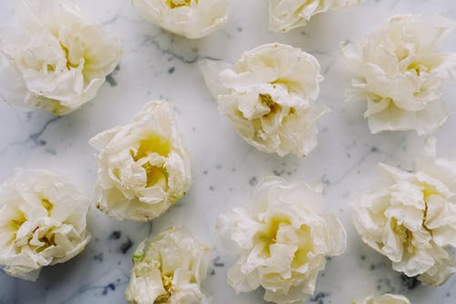 White Flowers On White Surface