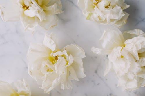 Ingyenes stockfotó növényvilág, szirmok, virág témában