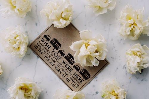 Foto stok gratis alat pembayaran, berkembang, bunga-bunga, flora