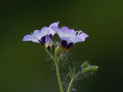 Macrophotography of Purple Petal Flower