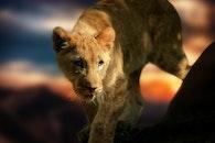 zoo, tiger, lion
