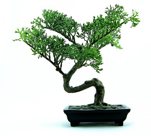 Free stock photo of bonsai, botany, chinese