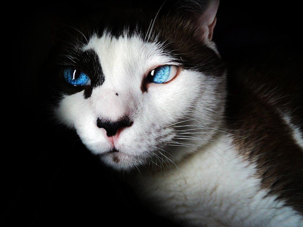 White and Black Short Fur Cat