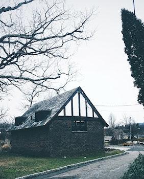 Free stock photo of wood, light, road, landscape