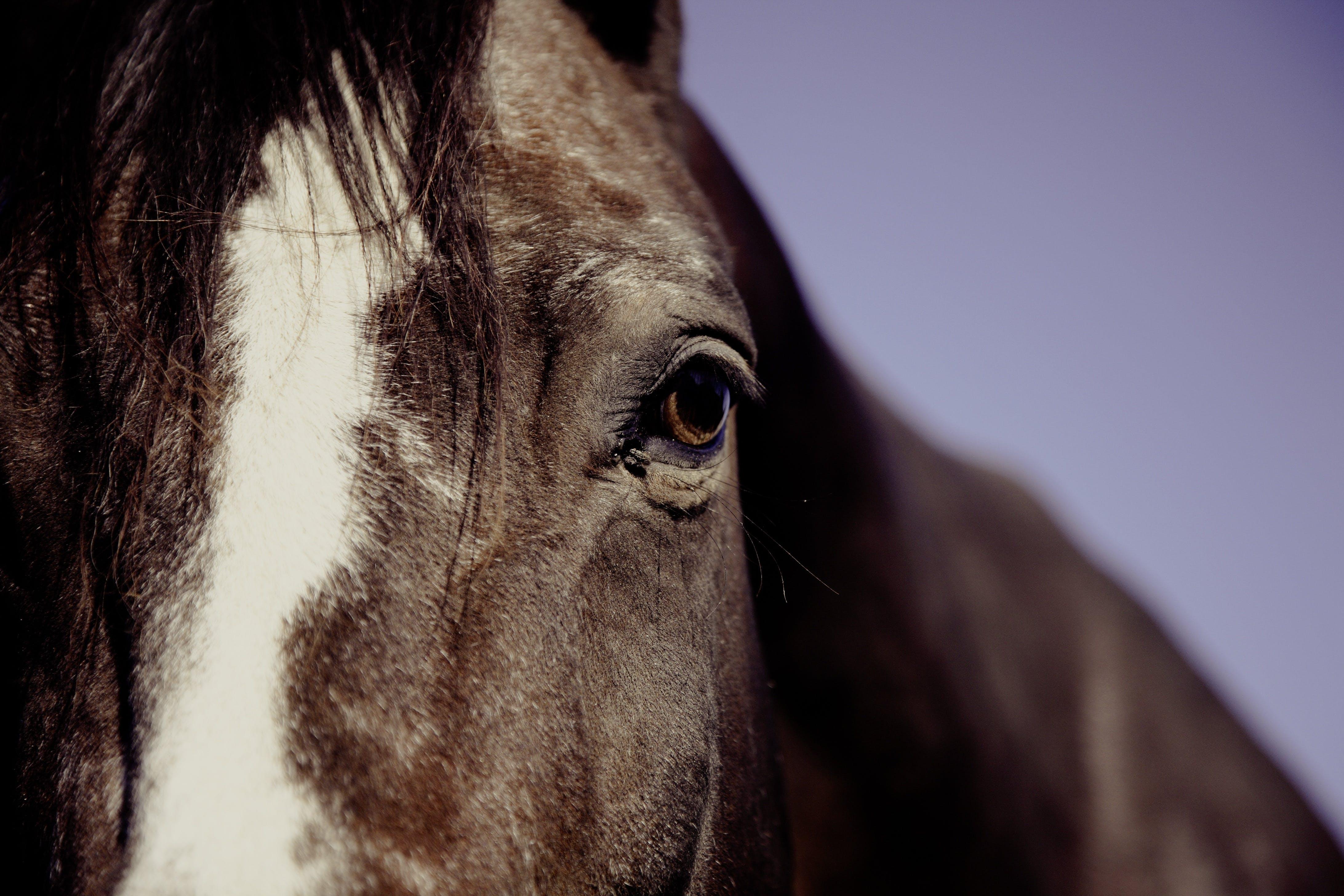 Foto d'estoc gratuïta de animal, cavall, fotografia d'animals, macro
