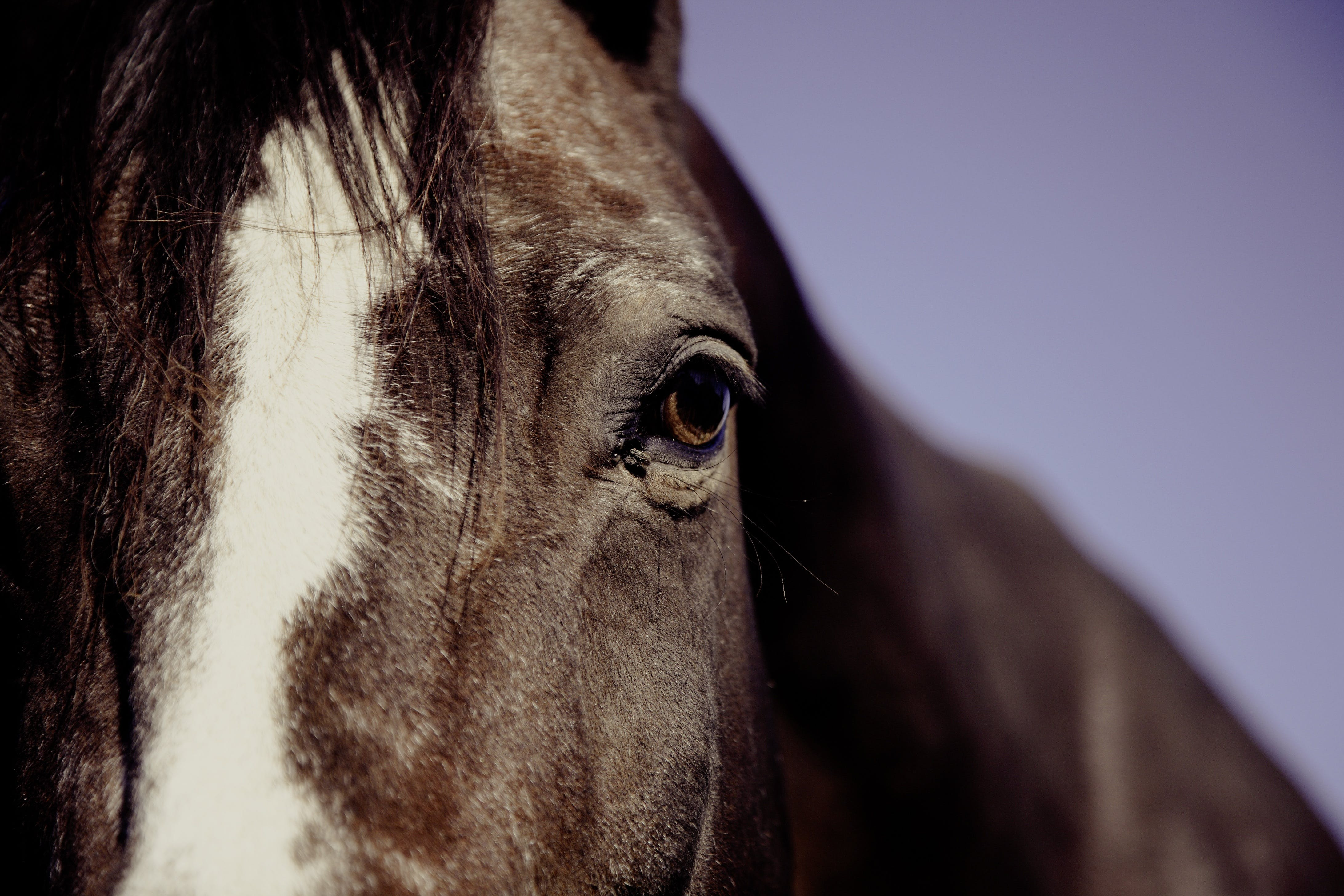 Horse Face in Focus Phography