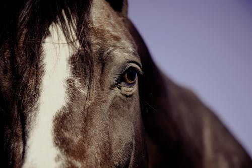 Imagine de stoc gratuită din animal, cal, fotografie de animale, fotografie de aproape