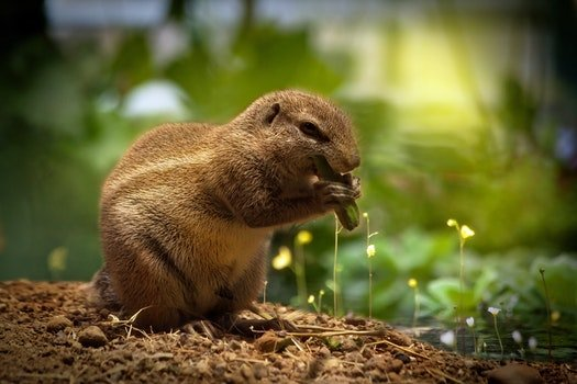 Brown Squirrel Eating Green Plant
