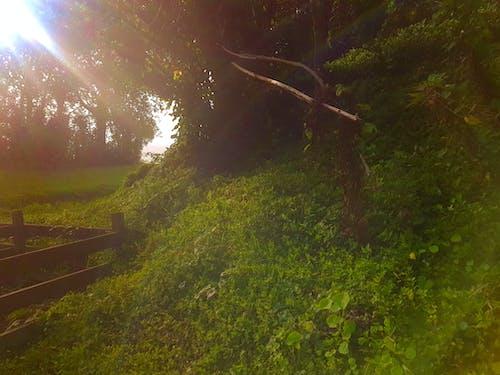 คลังภาพถ่ายฟรี ของ ขลัง, จินตนาการ, ดวงอาทิตย์, ตอนเช้า