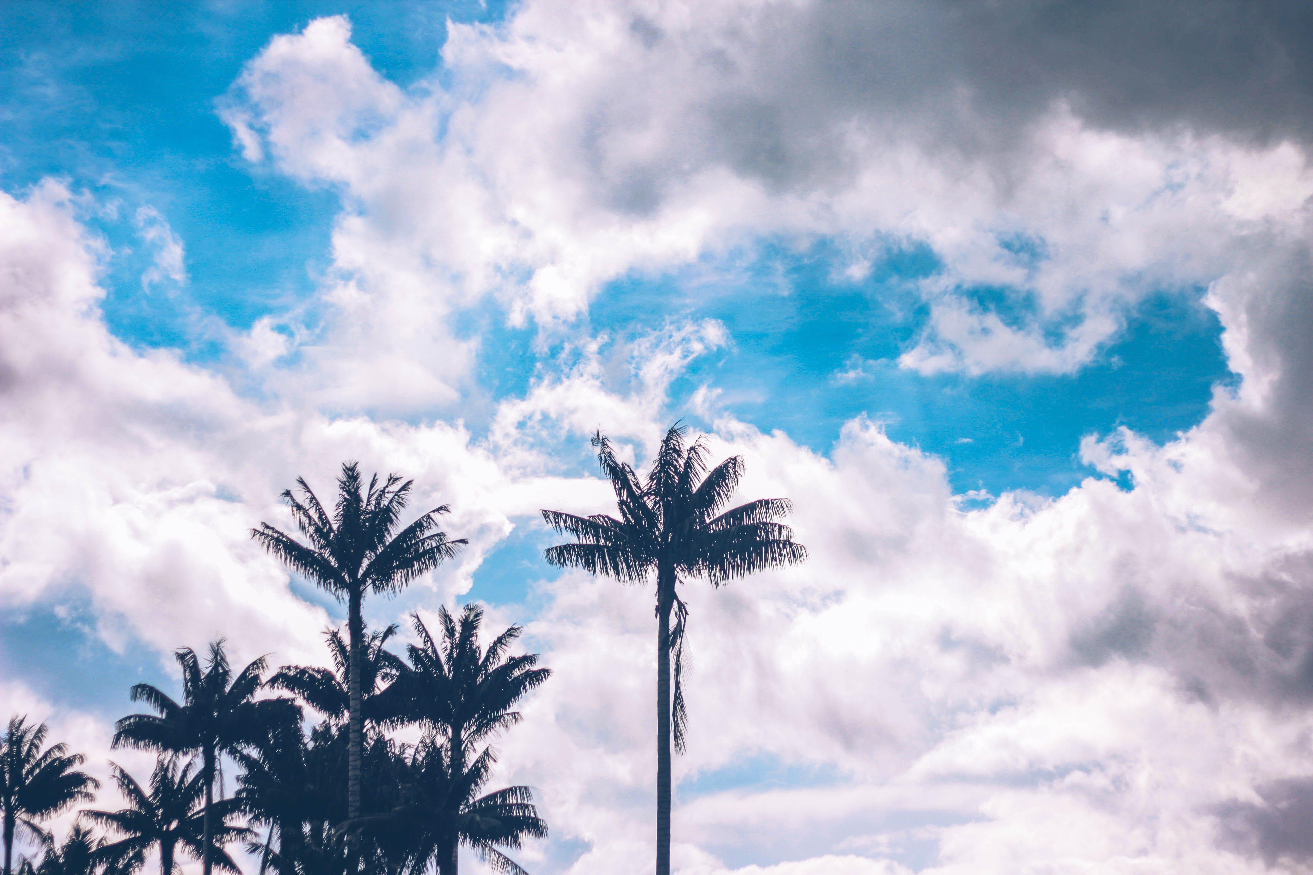 Free stock photo of sky, beach, clouds, blue