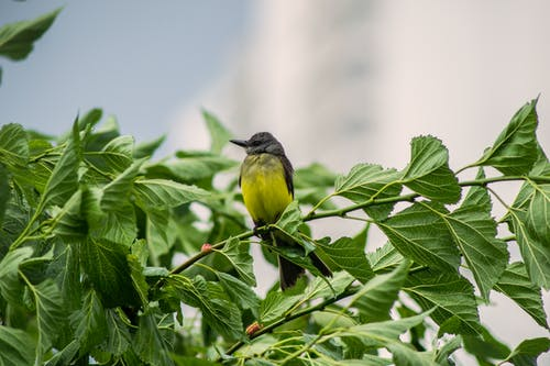 Foto profissional grátis de animais selvagens, animal, ave, avícola