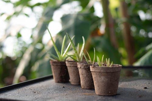 Gratis lagerfoto af gryder, kraftværker, planter, Potteplanter