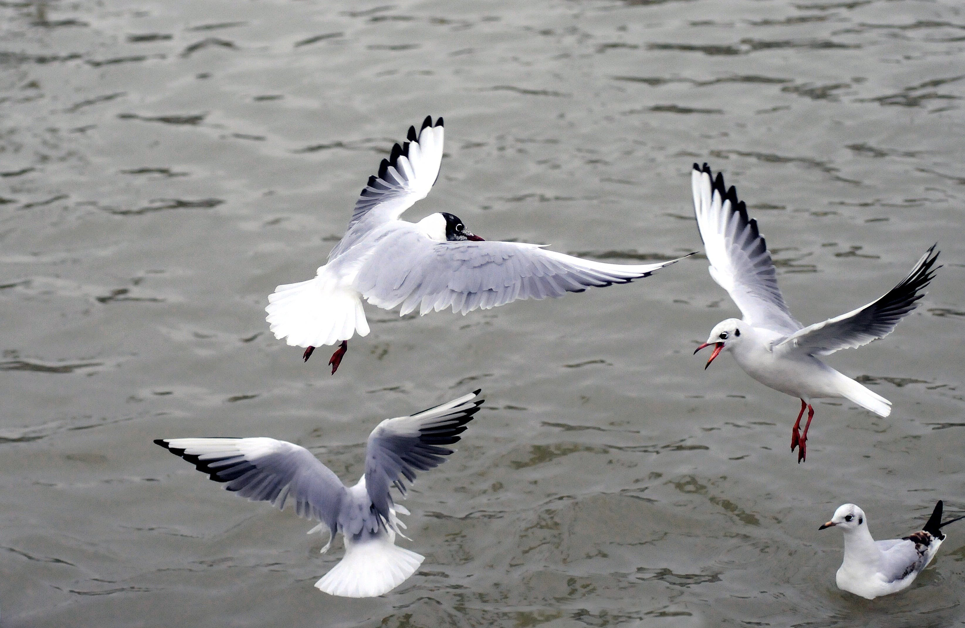 Four White Birds Flying on Air