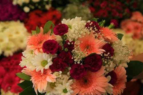 Free stock photo of ask, bahar, çiçek, doğa