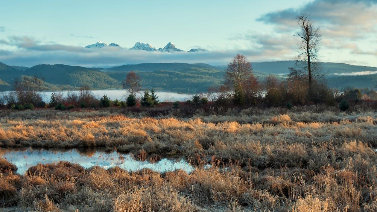 Flora rumput dan lumut kerap ditemukan di daerah tundra