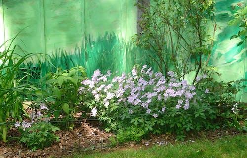 Free stock photo of garden flower, gardening