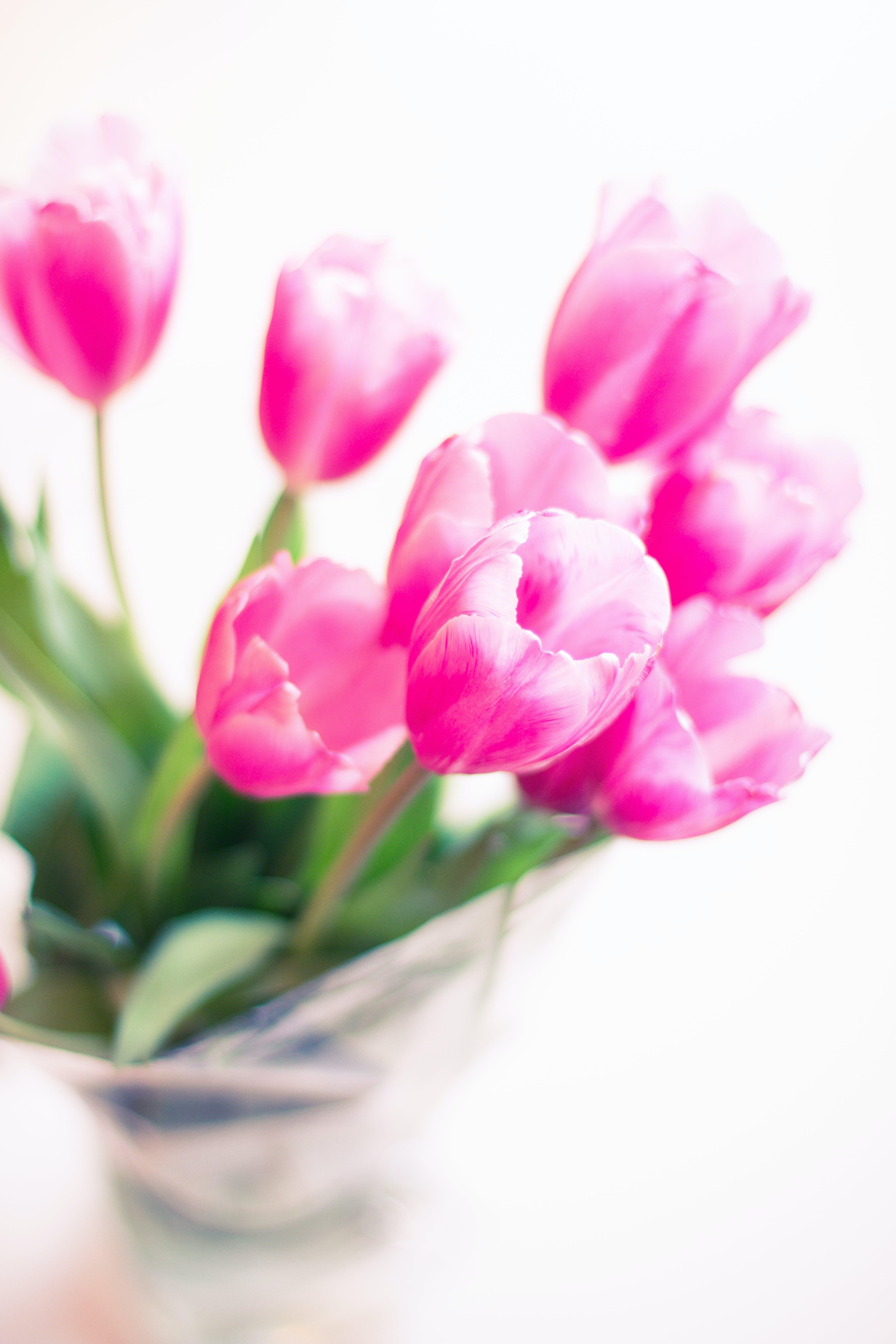 Kostenloses Stock Foto zu blumen, blumenstrauß, blütenblatt, dekoration