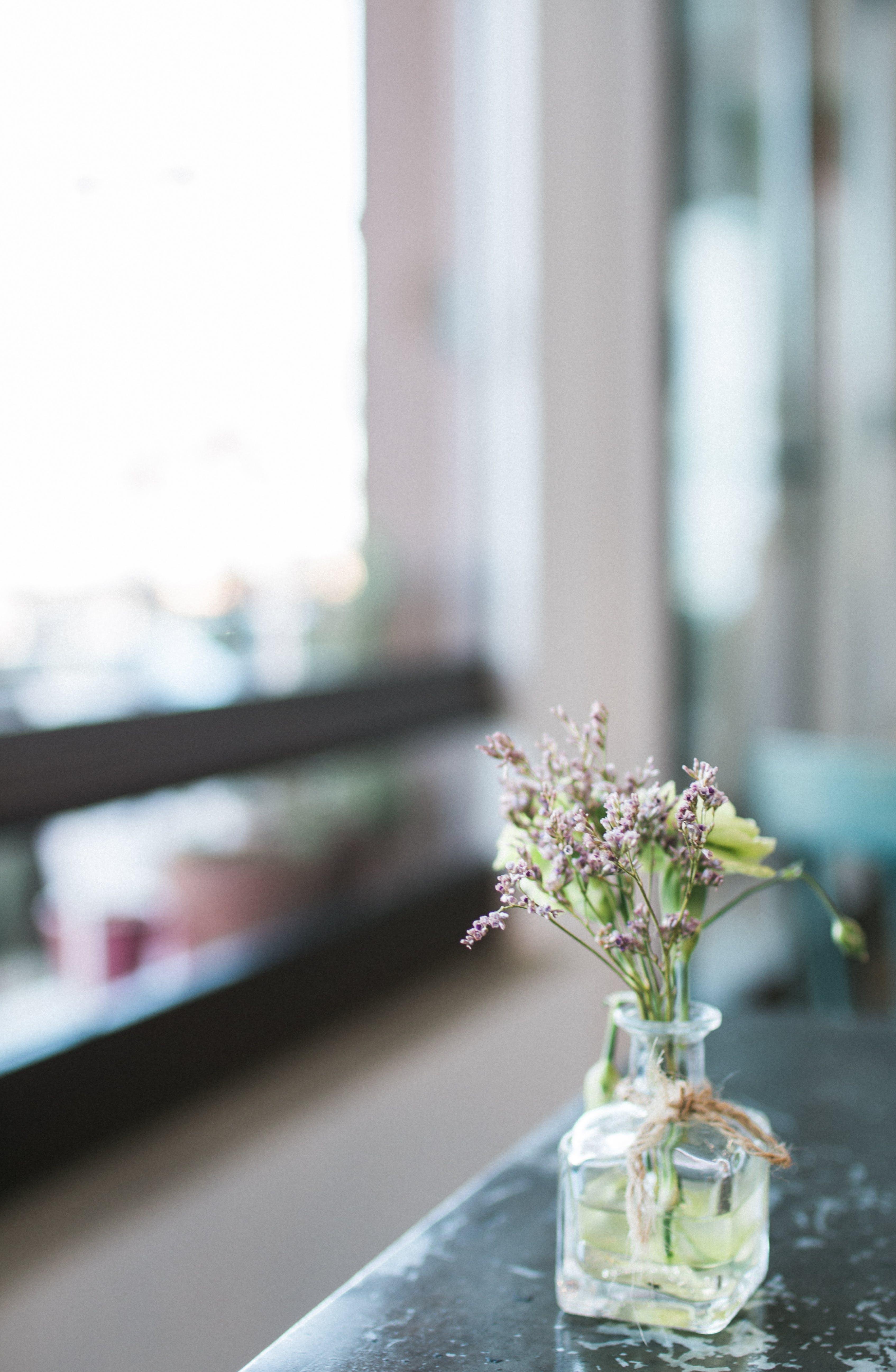Kostnadsfri bild av blomma, blomsterarrangemang, blomvas, delikat