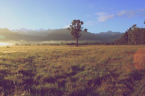 คลังภาพถ่ายฟรี ของ ดวงอาทิตย์, ต้นไม้, ท้องฟ้า, ธรรมชาติ