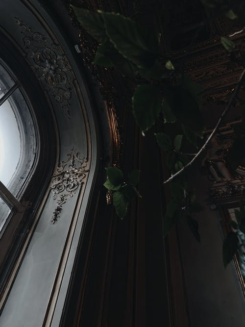 Old ornamental ceiling with arched window