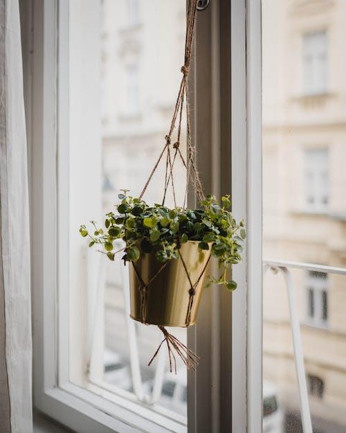 Green Plant On A Pot