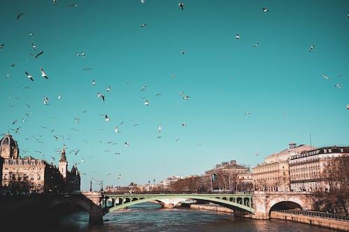 Flock of Birds Flying over the Bridge