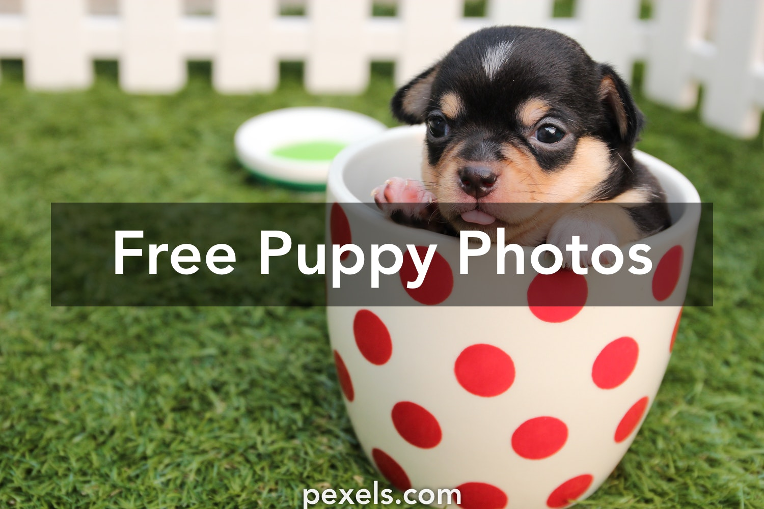 Free stock photos of puppy pexels voltagebd Choice Image