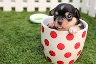 mug, animal, dog