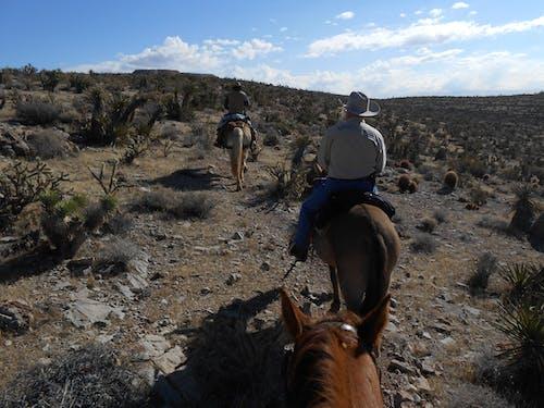 Free stock photo of desert, horseback riding