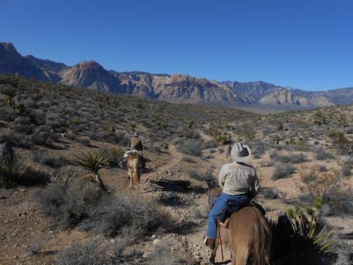 Free stock photo of desert, horse rider