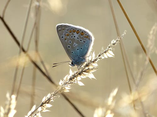 Blue and White Butterfly Perched on Brown Grass