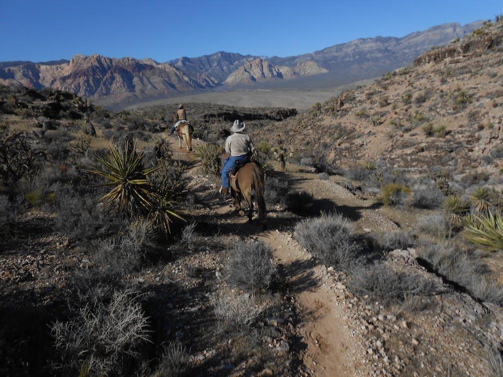 Free stock photo of desert, horseman