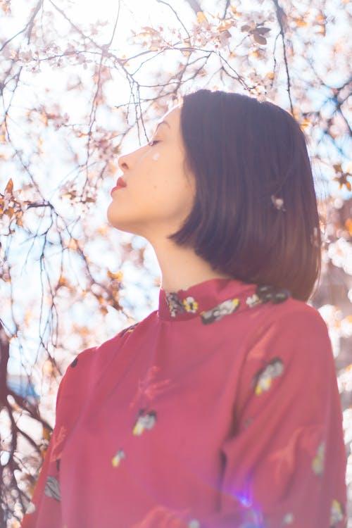 Foto profissional grátis de ângulo baixo, ao ar livre, aroma, aromático