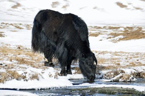 Free stock photo of acqua fredda, fotografia di viaggio, freddo inverno