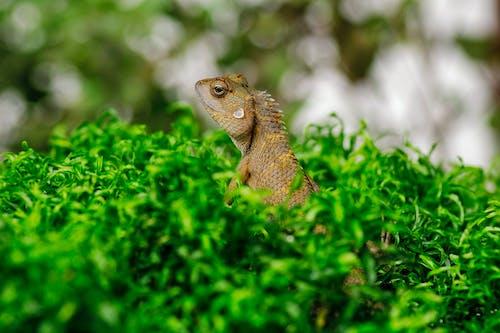 Exotic lizard in green grass