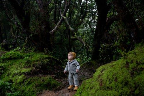 Foto profissional grátis de ao ar livre, árvore, aumento, bebê