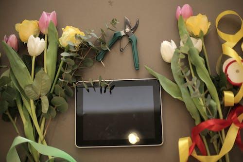 คลังภาพถ่ายฟรี ของ pruner, การจัดดอกไม้, การจัดส่ง, การจัดเรียง