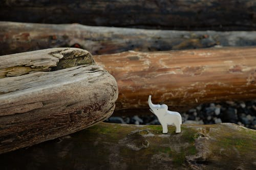 Toy figure of elephant placed on log on stony ground in nature