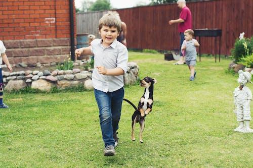 享受, 兒童, 品種, 哺乳動物 的 免費圖庫相片