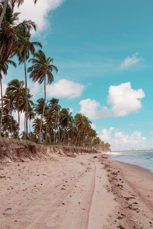 Ilmainen kuvapankkikuva tunnisteilla brasilia, hiekka, kesä, kookoslehdet